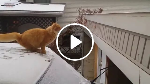1, 2, 3... Jump, Ha Ha - Video & GIFs | funny fail, funny cat, animals, jump