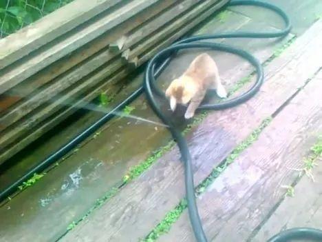 Little cat repairing plumbing