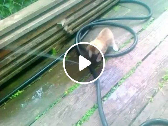 Little cat repairing plumbing, Animals, Plumbing, Garden Hose, Garden Pipe, Water Pipe, Cute Cat