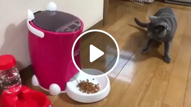 Congratulations! You've won a plate full of food, animals, funny cat, pet food, plate