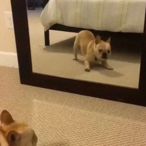 Dancing in front of a mirror