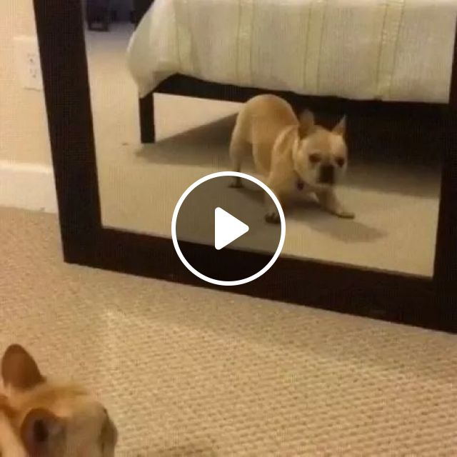 Dancing In Front Of A Mirror - Video & GIFs | animals, funny dog, dance, mirror