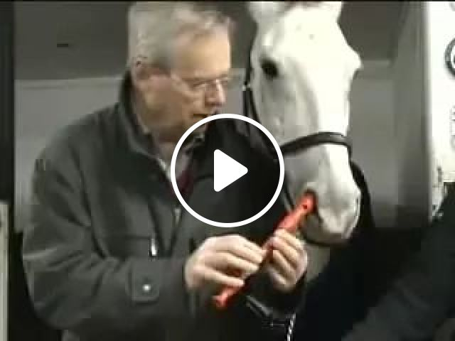 ABC Songs, Animals, Funny Horse, Talent, Flute