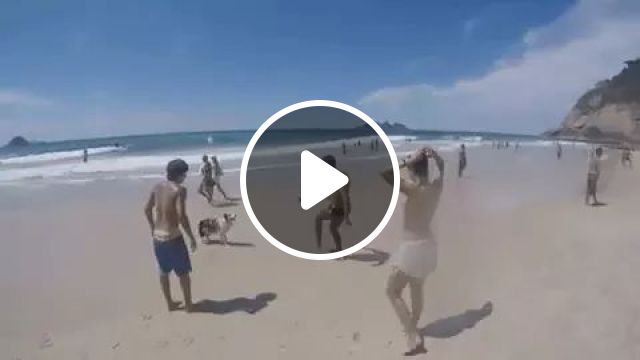 Clever dog can play football very well, animals, Border Collie, Funny Dog, Smart Dog, Beach, Football, Ball, sport