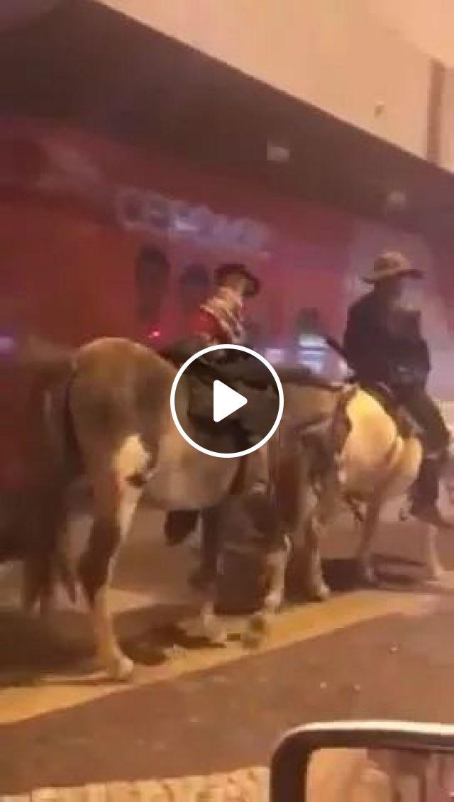 Dog ride horse, Animals, funny dog, horse, cowboy