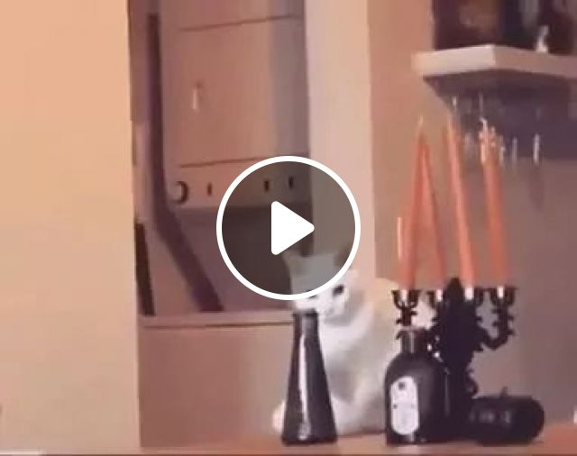 Can cats understand commands?, Funny, Cat Knock Things Over, Funny Cat, Bottle, animals