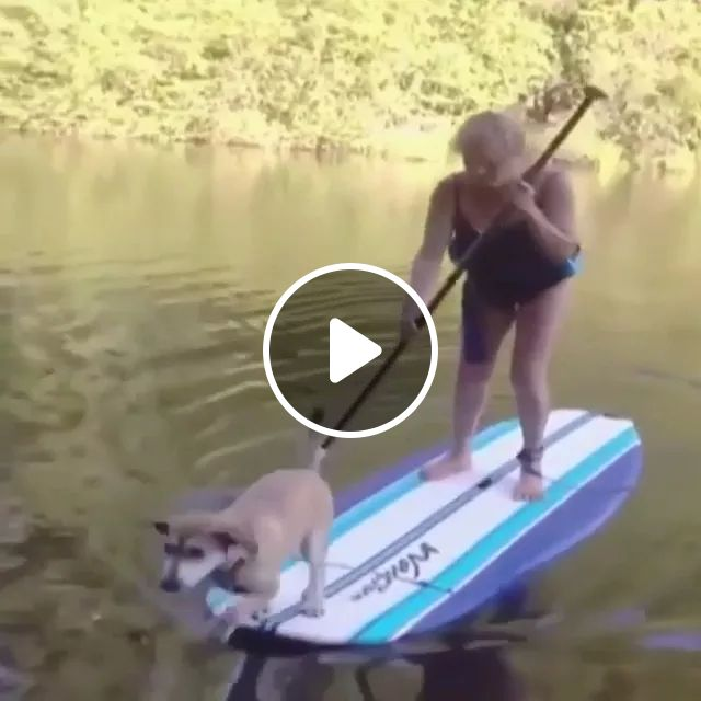 I'm so sorry, haha, Funny Dog, animals, Wet, River, Paddle Board