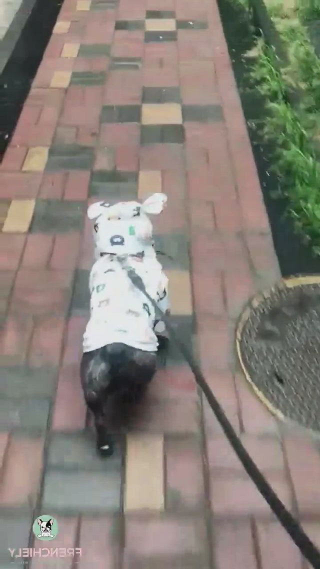 Cartoon French Bulldog Rain Jackets - Video & GIFs   bulldog clothes,french bulldog clothes,bulldog,dog raincoat,medium dogs,more cute,winter sweaters,french bulldogs,pet clothes,dog life,pugs