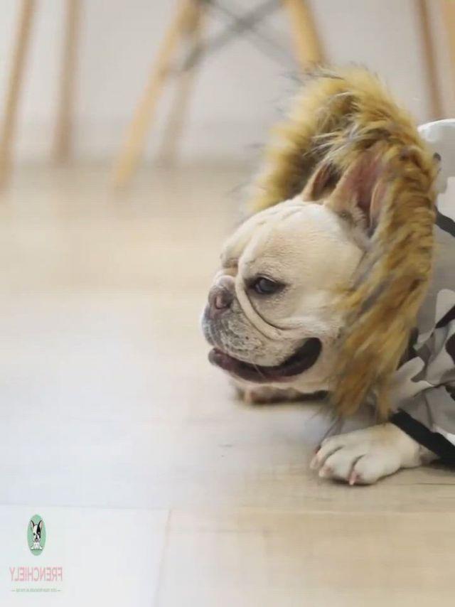 Dog Camo Parka Coat for Medium Dogs - Video & GIFs   dog sweaters,bulldog clothes,dog parka,french bulldog clothes,french bulldog blue,french bulldog puppies,pug puppies,pugs,french bulldogs,dog raincoat,parka coat,pug