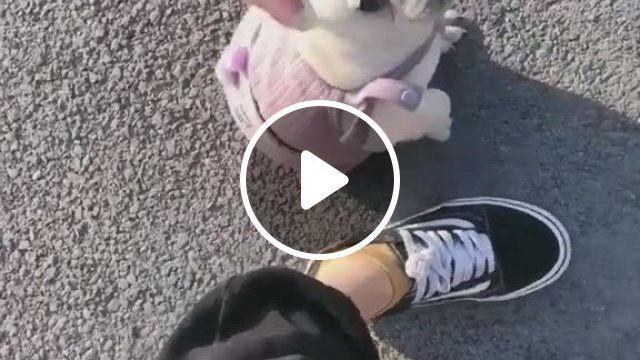 French Bulldog Love - Video & GIFs   cute funny puppy videos, french bulldog puppies, french bulldog, funny puppies, cute gif, more cute, bulldogs, bullying, french bulldog pups, bulldog breeds