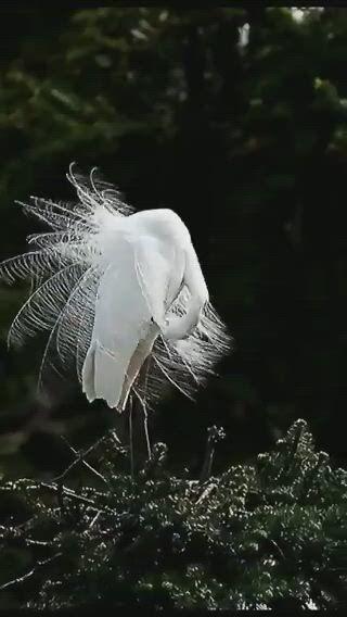 Egret pretty birds