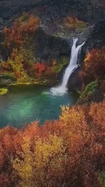 Golden colours of autumn - Video & GIFs | beautiful places nature,amazing places on earth,beautiful gif,beautiful places,cute hairless cat,emerald lake,good morning flowers,autumn scenery