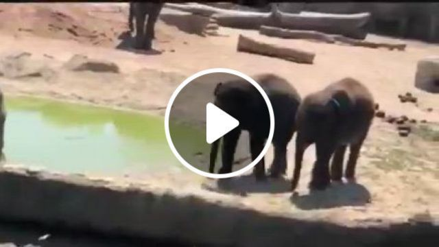 Move Away From My Teritory - Video & GIFs | cute animal , nature gif, cute animals, wtf moments, just for laughs, fur babies, elephant, in this moment, funny